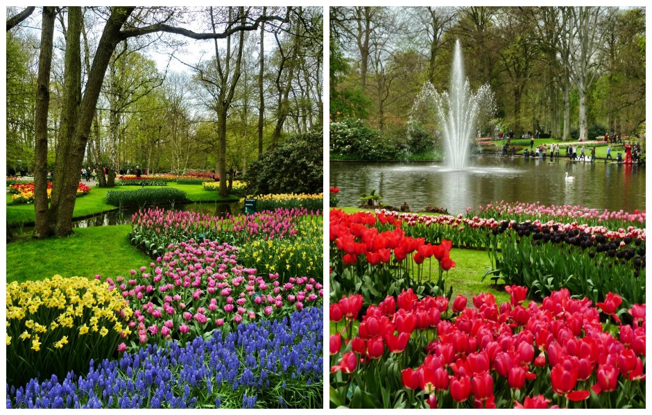 Tulpenblüte in Holland: Keukenhof