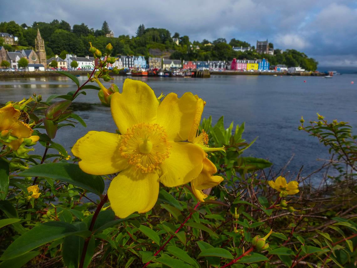 Geheimtipp für Schottland Die Isle of Mull (2)