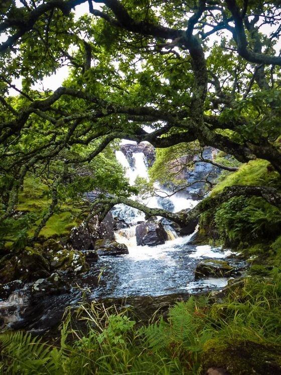 Geheimtipp für Schottland Die Isle of Mull (27)