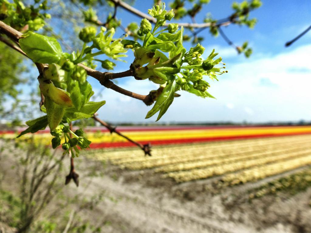 Zur Tulpenblüte nach Holland: Autoroute