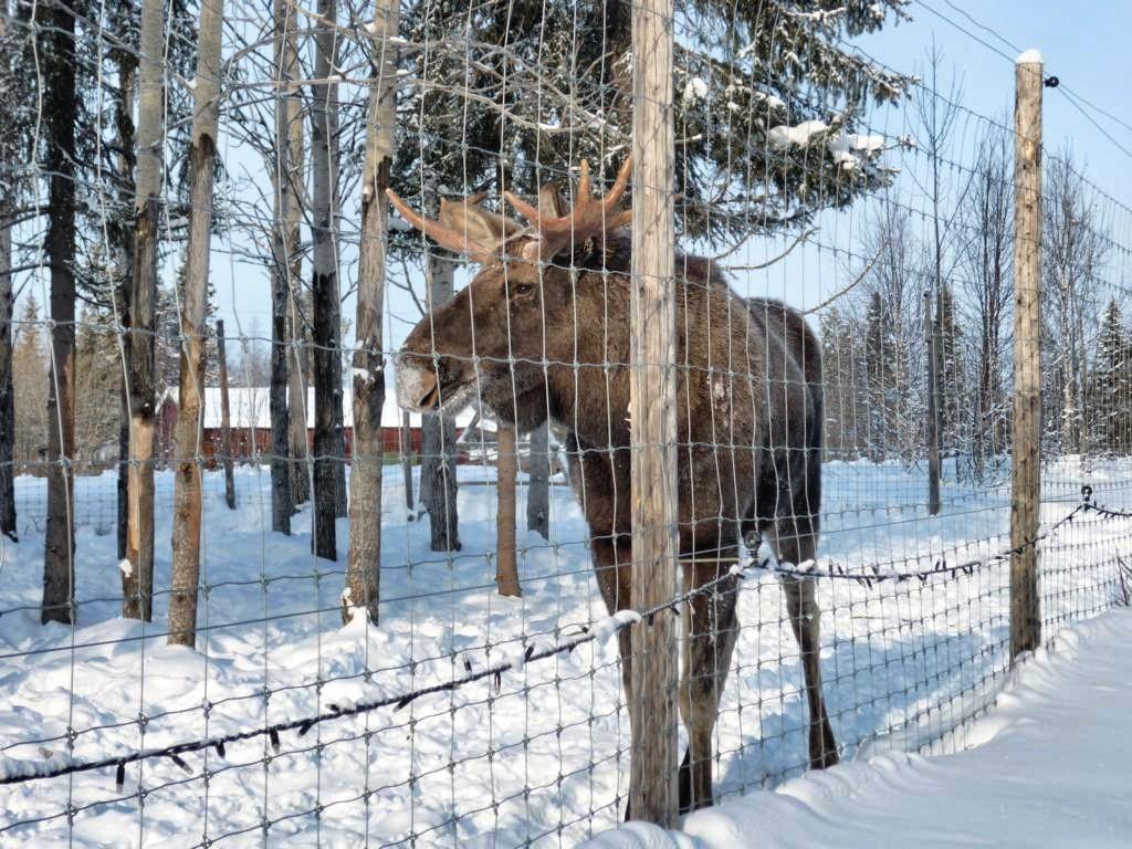 Echpark in Lappland