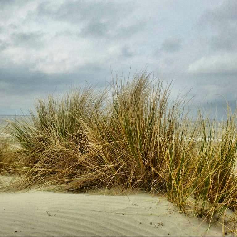 Wellen, Wind und Weite auf Ameland