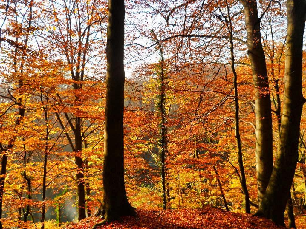 Herbst Bucket List