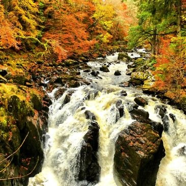 Herbstwandern in Schottland – Braan Walk @ The Hermitage, Dunkeld