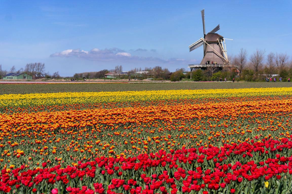Die schönsten Tulpenfelder von Holland