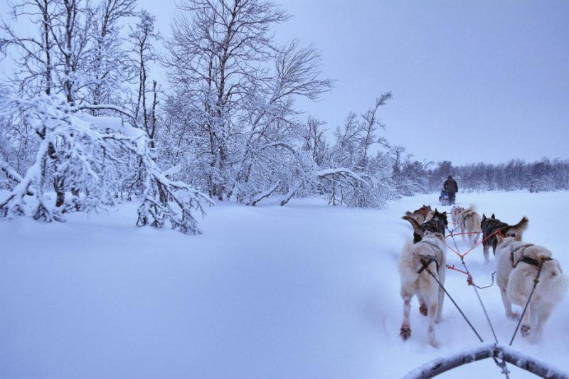 Hundeschlittentour in Lappland (10)