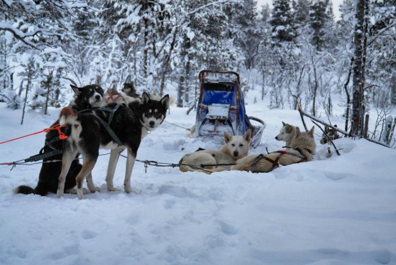 Hundeschlittentour in Lappland (15)