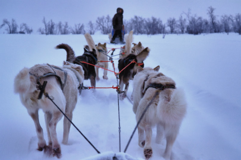Hundeschlittentour in Lappland (20)