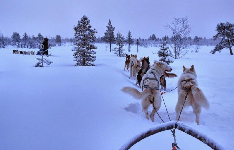 Hundeschlittentour in Lappland (22