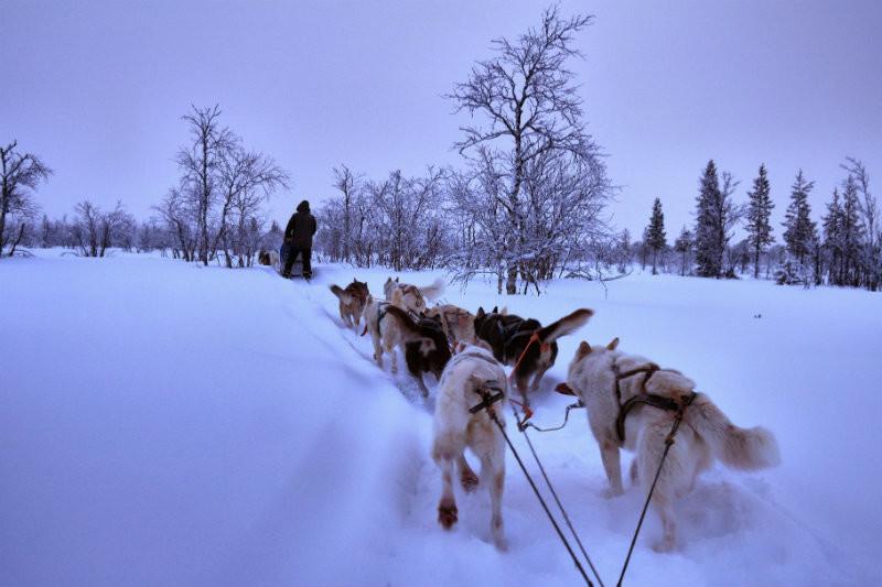 Hundeschlittentour in Lappland (24)