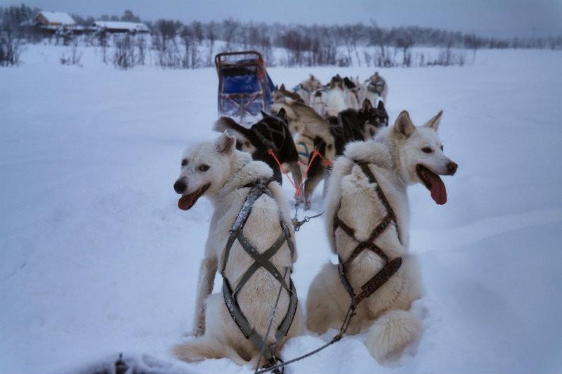 Hundeschlittentour in Lappland (25)