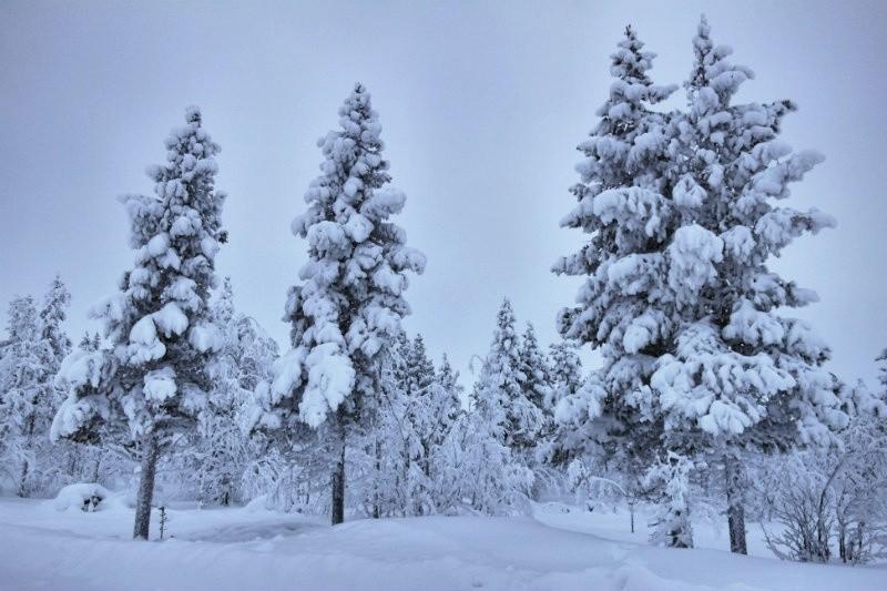 Hundeschlittentour in Lappland (29)_