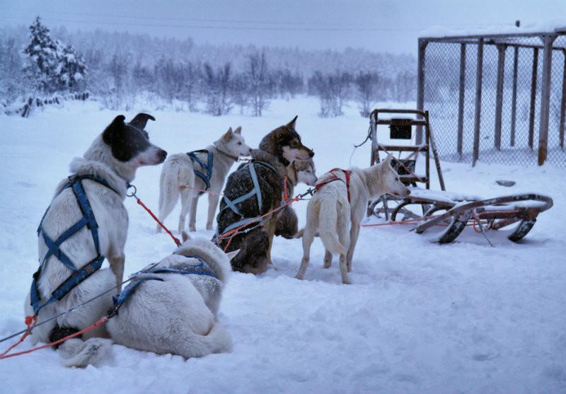 Hundeschlittentour in Lappland (4)