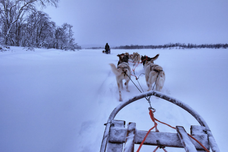 Hundeschlittentour in Lappland (5)
