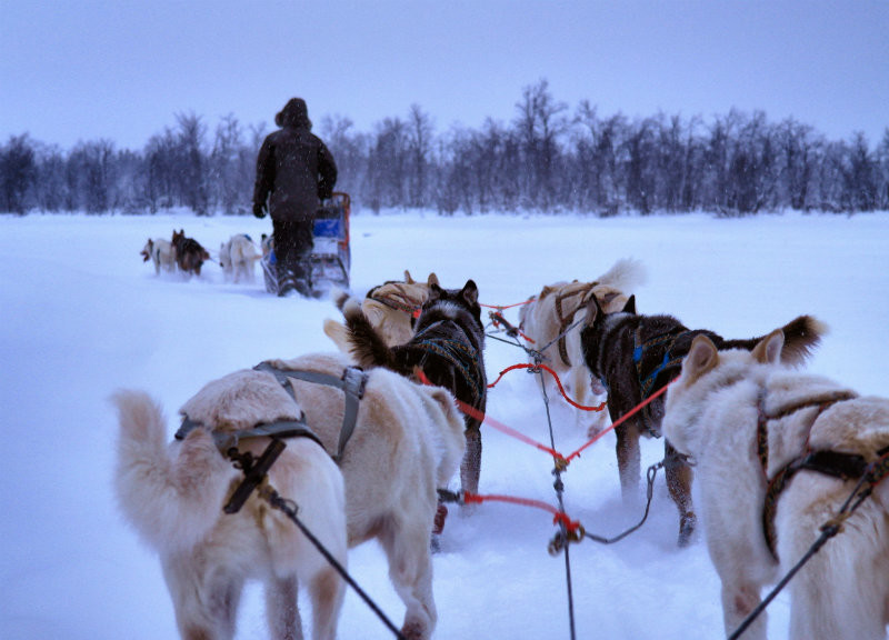 Hundeschlittentour in Lappland (8)