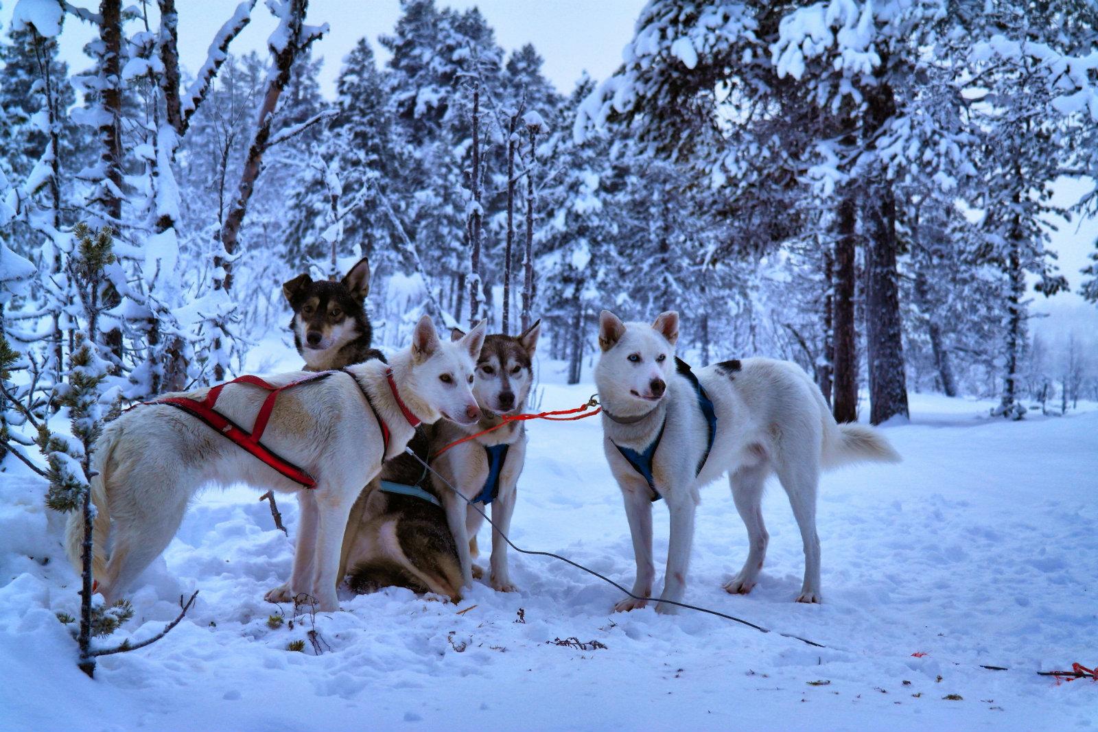 Lappland individuell organisieren