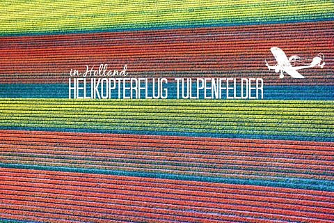 Helikopterflug über die Tulpenfelder