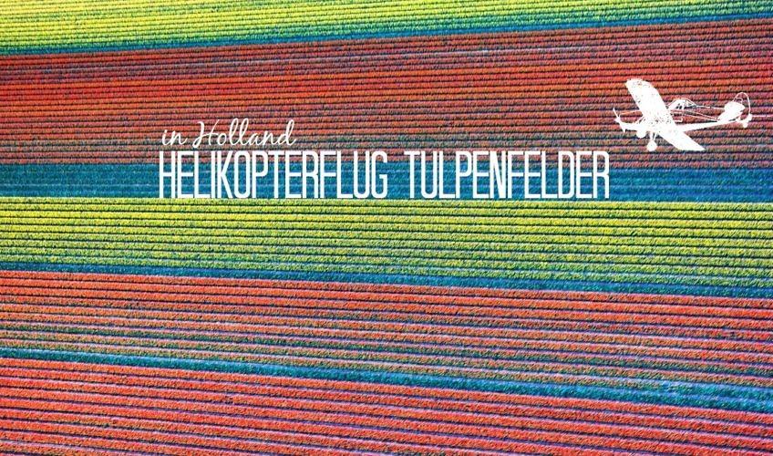 Helikopterflug über die Tulpenfelder in Holland