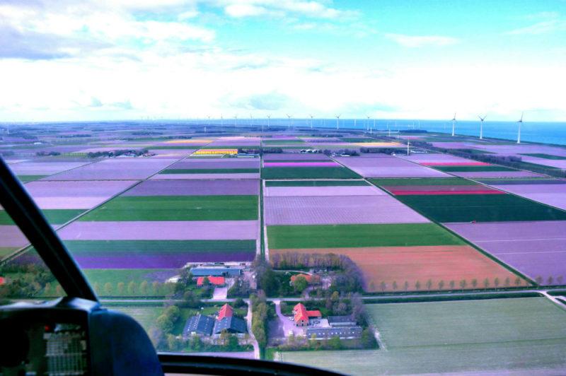 Helkopterflug über die Tulpenfelder (10.1)