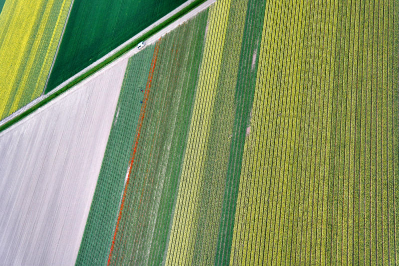 Helkopterflug über die Tulpenfelder (11)