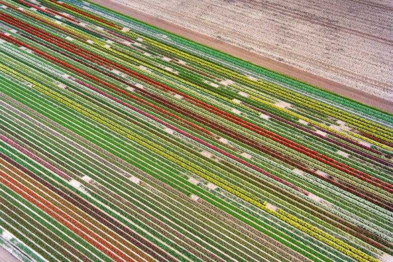 Helkopterflug über die Tulpenfelder (14.1)