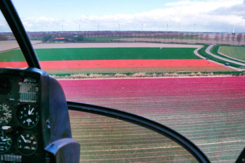 Helkopterflug über die Tulpenfelder (14.4)