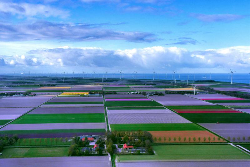 Helkopterflug über die Tulpenfelder (18)