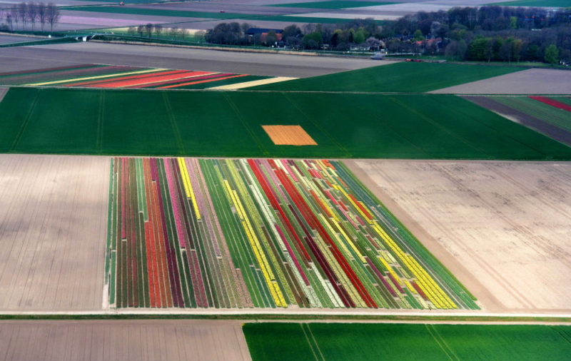 Helkopterflug über die Tulpenfelder (4)