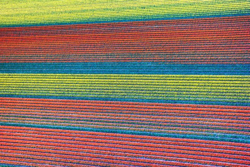 Helkopterflug über die Tulpenfelder (5.3)