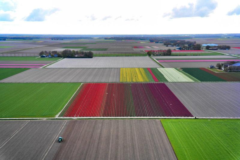 Helkopterflug über die Tulpenfelder (7)