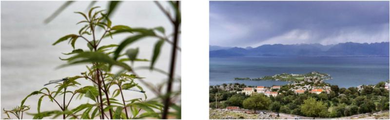 Kanufahren auf Montenegros Skutarisee 4