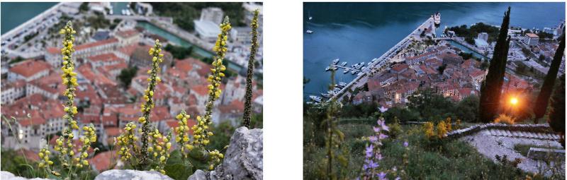 Dubrovnik & Montenegro Road Trip (141)