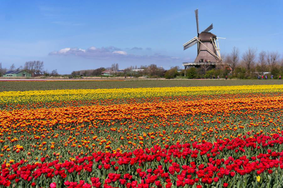 Die schönsten Ausflugsziele in Holland - Tulpenfelder