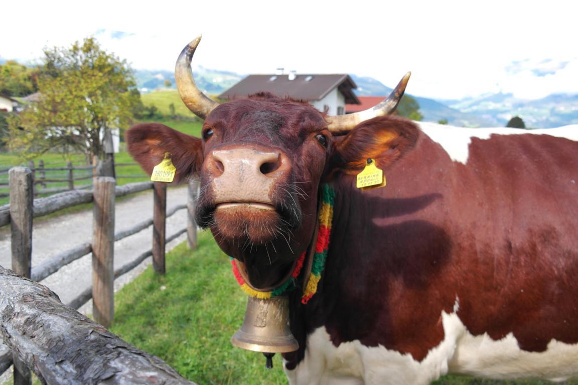Kurzurlaub in Südtirol - Almabtrieb
