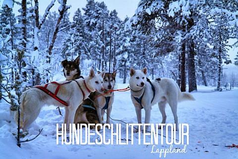 Hundeschlittentour in Lappland