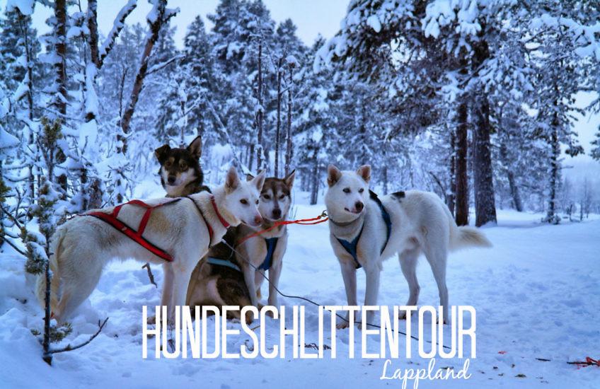 Hundeschlittentour in Lappland: Rasant durch's Winterwunderland