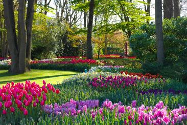 Tulpenblüte in Holland - Keukenhof