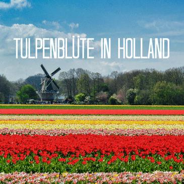 Tulpenblüte in Holland - Alle Tipps und Events