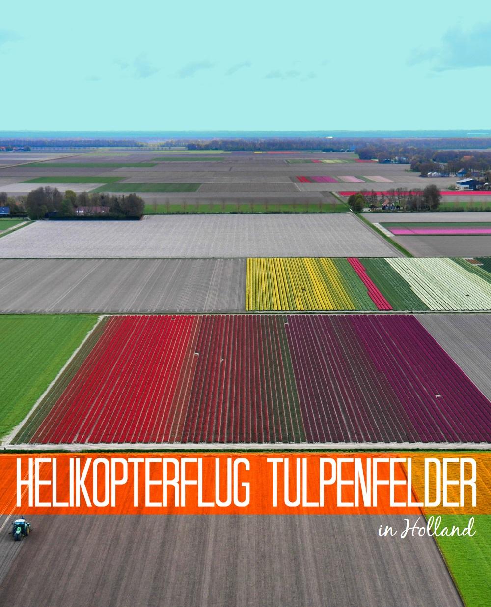 Helikopterflug über die Tulpenfelder in HollandHelikopterflug über die Tulpenfelder in Holland