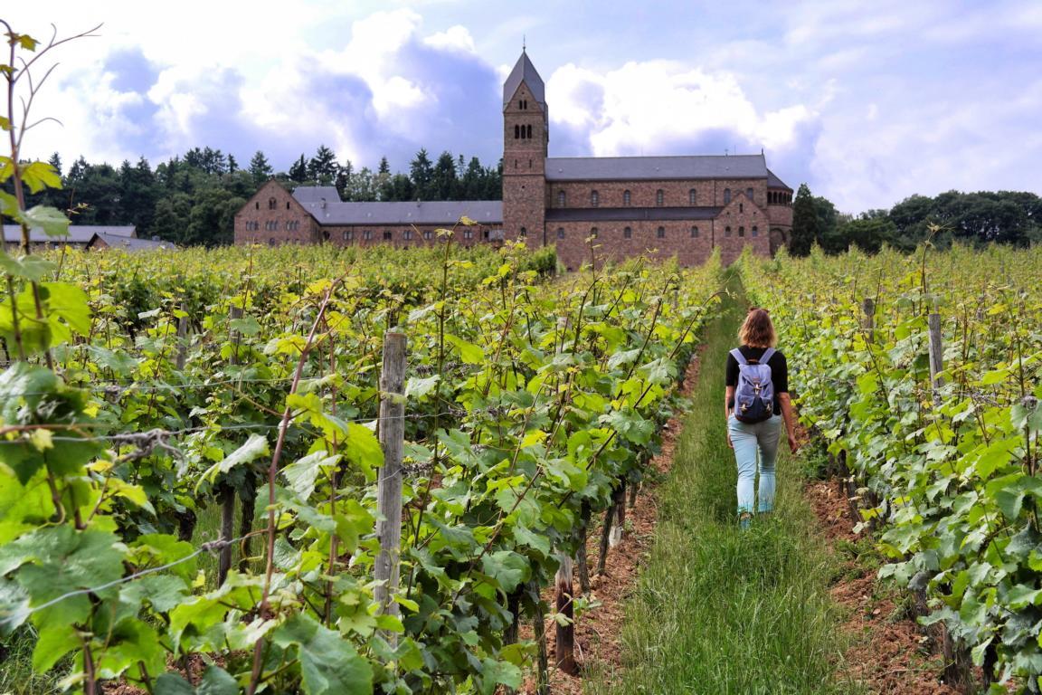 Genusswandern am Rhein Eibinger Weinwanderung
