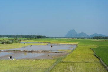 Tipps für Hpa-An - Reisfelder