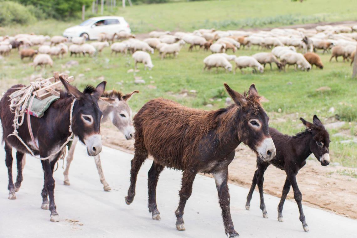 Abenteuer Mietwagen in Georgien und Armenien