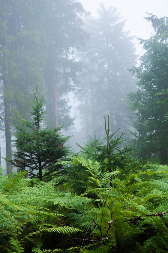 Trekking im Schwarzwald: Wildcampen, Rezepte und Packliste für eine Mehrtageswanderung