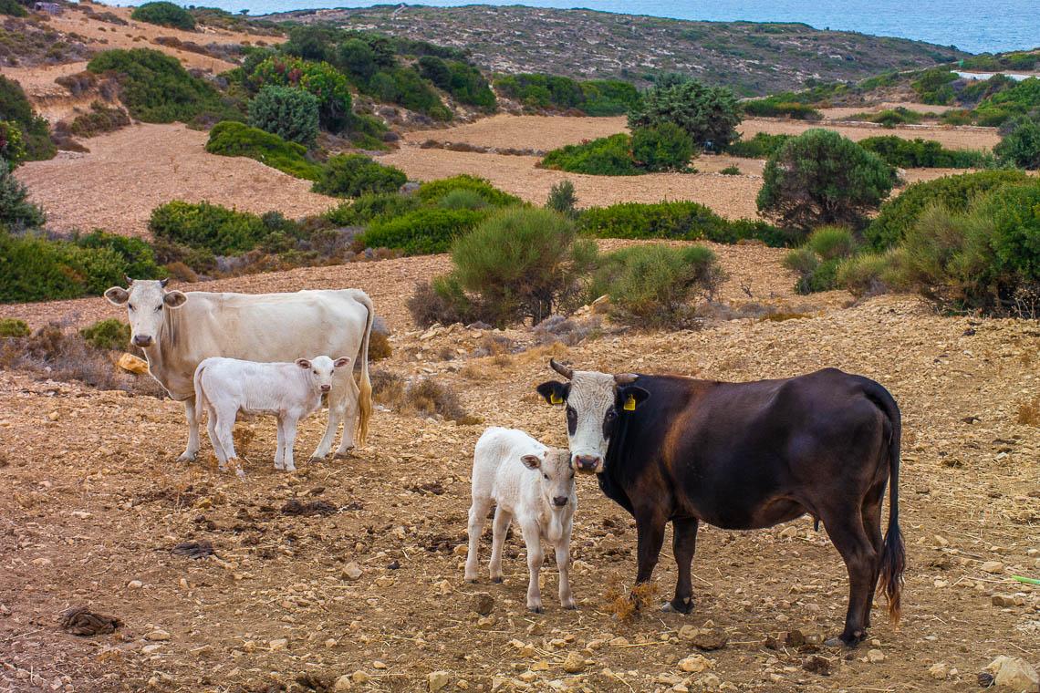 Griechenland Geheimtipp Gastfreundschaft & nachhaltiger Tourismus auf der Insel Lipsi (192)