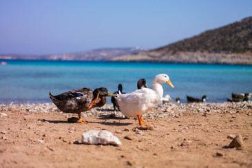 Griechenland Geheimtipp Gastfreundschaft & nachhaltiger Tourismus auf der Insel Lipsi (57)