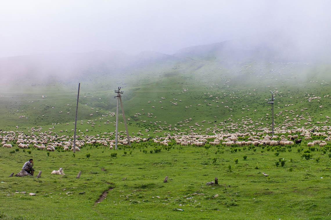 Georgien & Armenien Roadtrip
