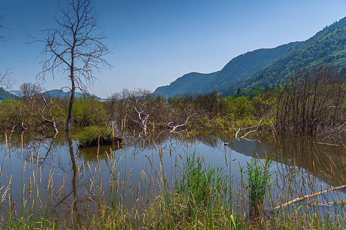Ein Ort im Wandel: Das wieder regenerierte Bleistätter Moor