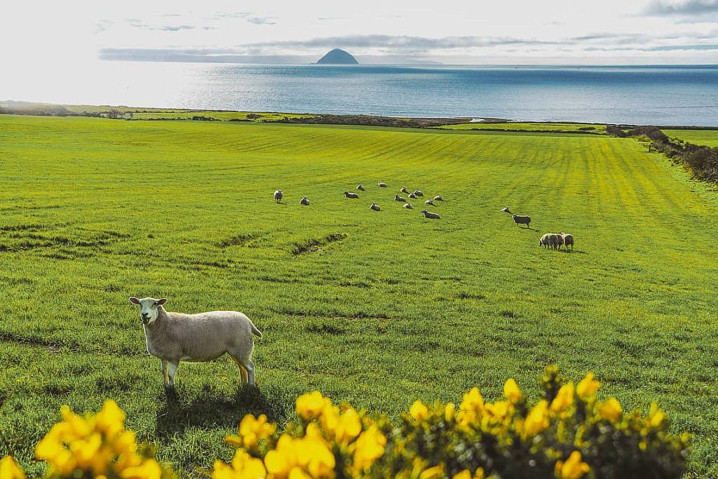 Isle of Arran: Sehenswürdigkeiten & Tipps für das Miniatur-Schottland