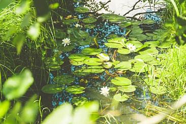 Kanutour im Spreewald (1)