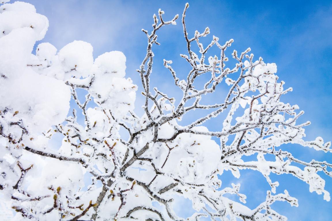 Winterwandern auf dem Feldberg